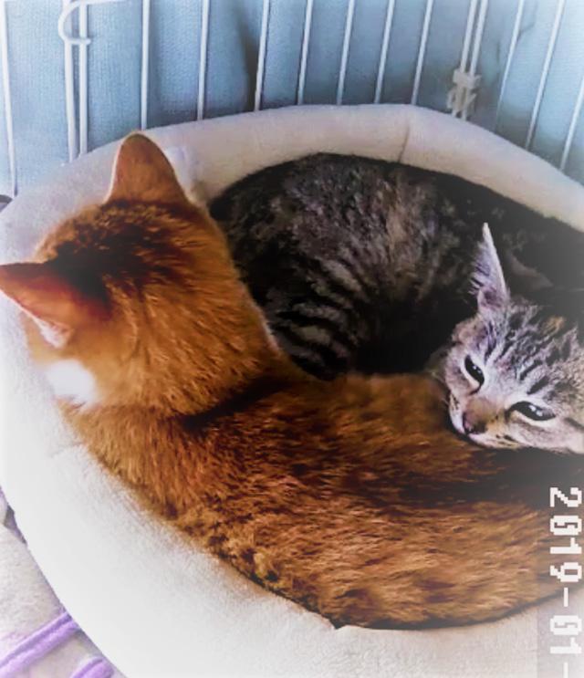 猫用ベッドにぎっちり