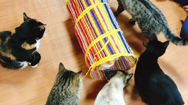 トンネルに群がる猫たち