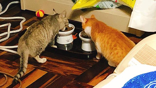 二匹がすぐ食べるように