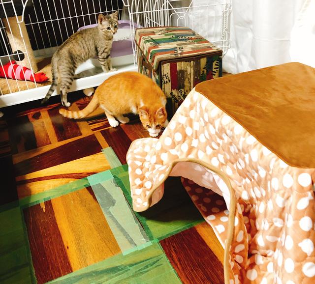 猫用コタツ