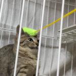 ナデナデ訓練(1)【保護猫と仲良くなろう】