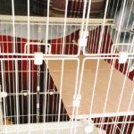 猫用3段ケージにステップをDIYで追加して生後2ヶ月の子猫も快適に!