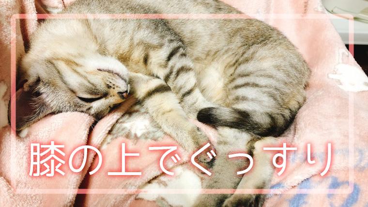 お膝の上で抱っこした猫