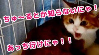 動画用サムネ