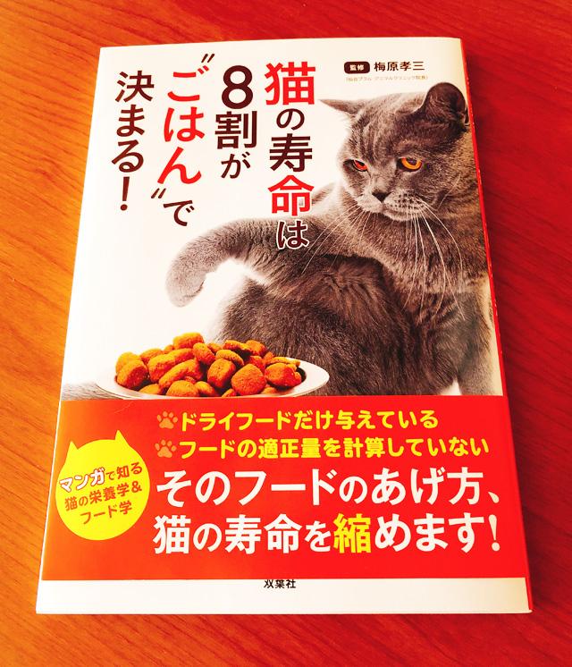 猫の寿命は8割がごはんで決まる!