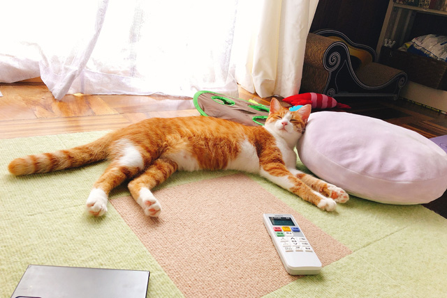 床に落ちてる猫