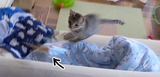 キャットスピナー猫じゃらし