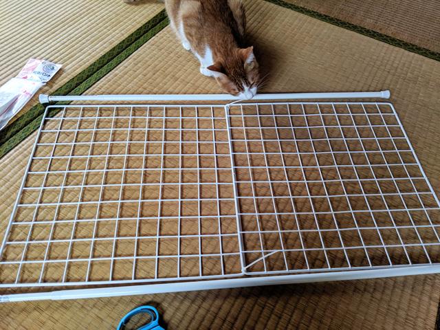 猫の玄関の脱走対策