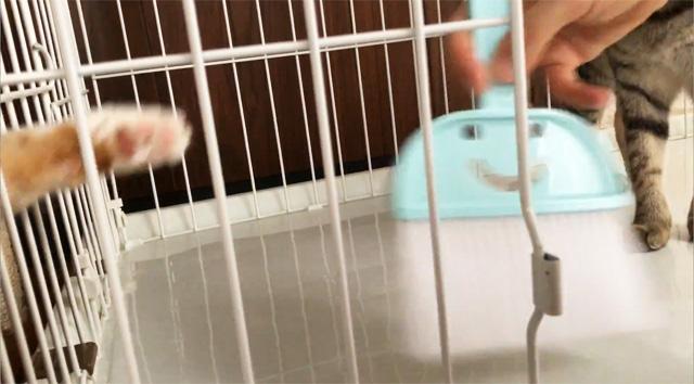 ケージの掃除を邪魔する猫