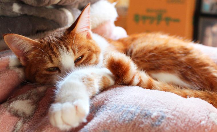 猫を可愛く撮影したい