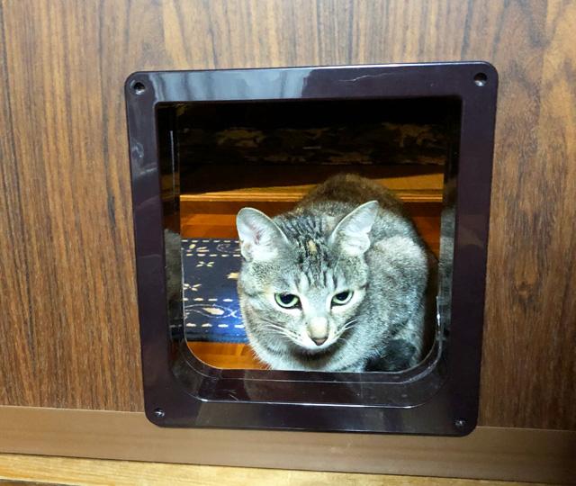 猫用ペットドア