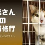 【保護猫】三毛さんの家猫修行③~ケージはいつまで?~