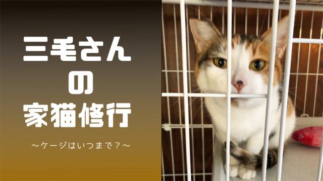 三毛さんの家猫修行3
