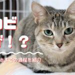 【完治済み】成猫ですが猫カビが再発しました